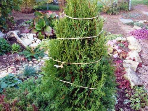 Подобрав для растения подходящее место, за несколько шагов производят посадку саженца