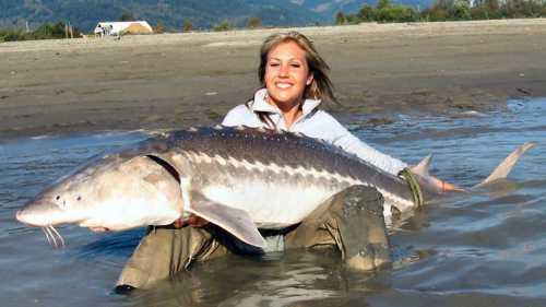 К чему снится большая рыба, покупать большую