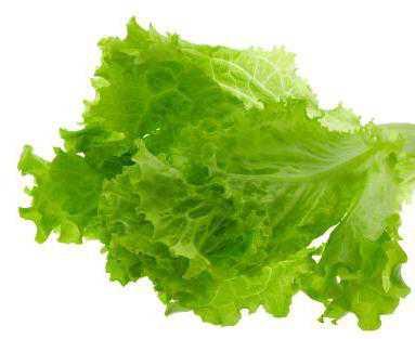 Полезные свойства салата листового, лечебные