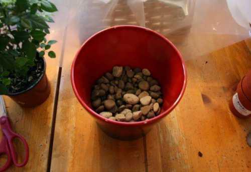 Дренаж для комнатных растений