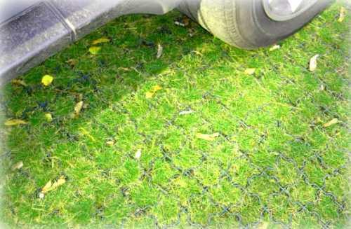 Как вариант, может применяться для озеленения крыш или укрепления берегов, подходит для оформления детских площадок