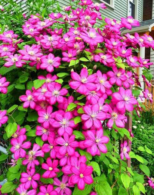 Декоративные растения с крупными цветками — отличное украшение дома